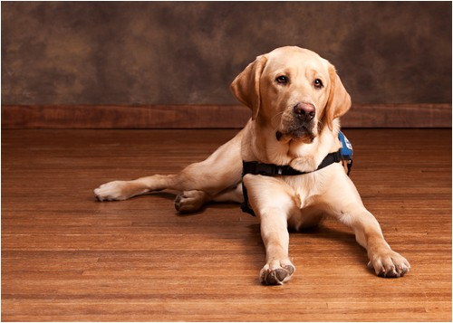 Bamboo Flooring Good for Dogs is Bamboo Flooring Good for Dogs Bamboo Flooring Blog