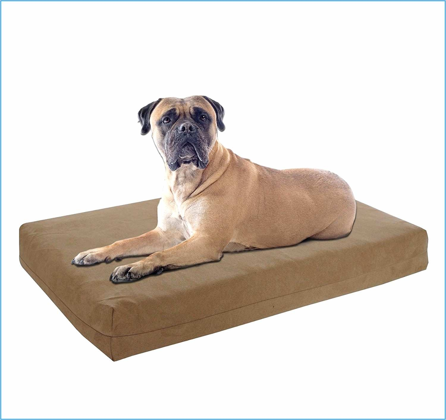 admirably pictures of barksbar orthopedic dog bed