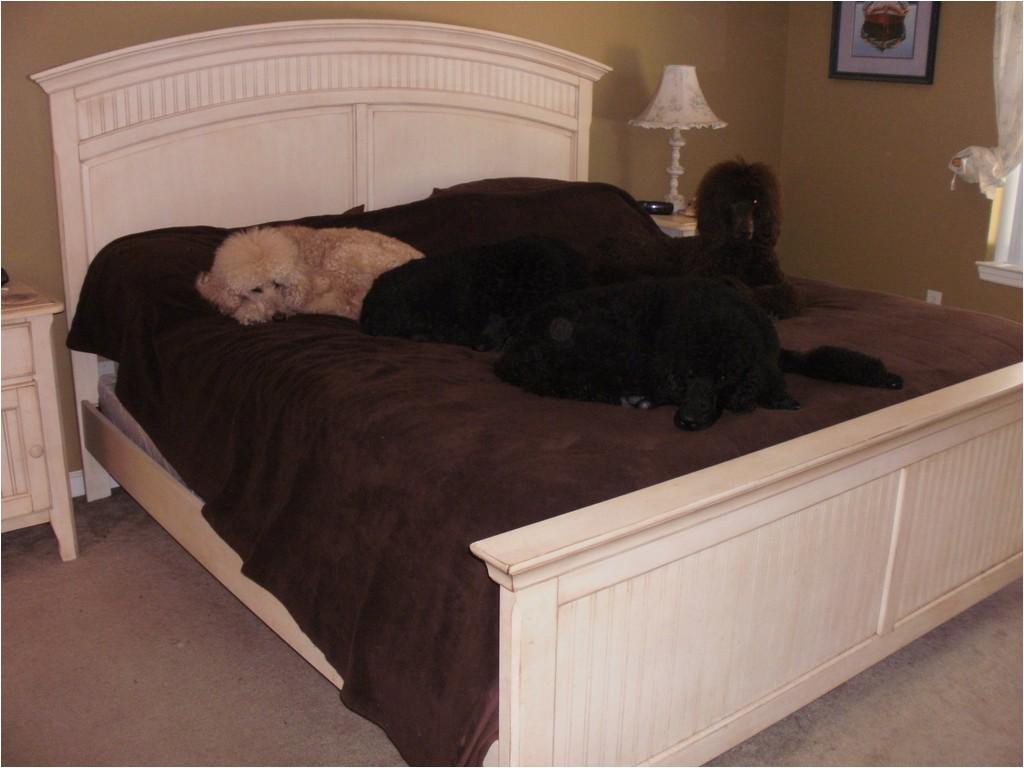 bedroom doggie dilemma bed bedside platform dog bed for sale bed 56ea20d2811143e2