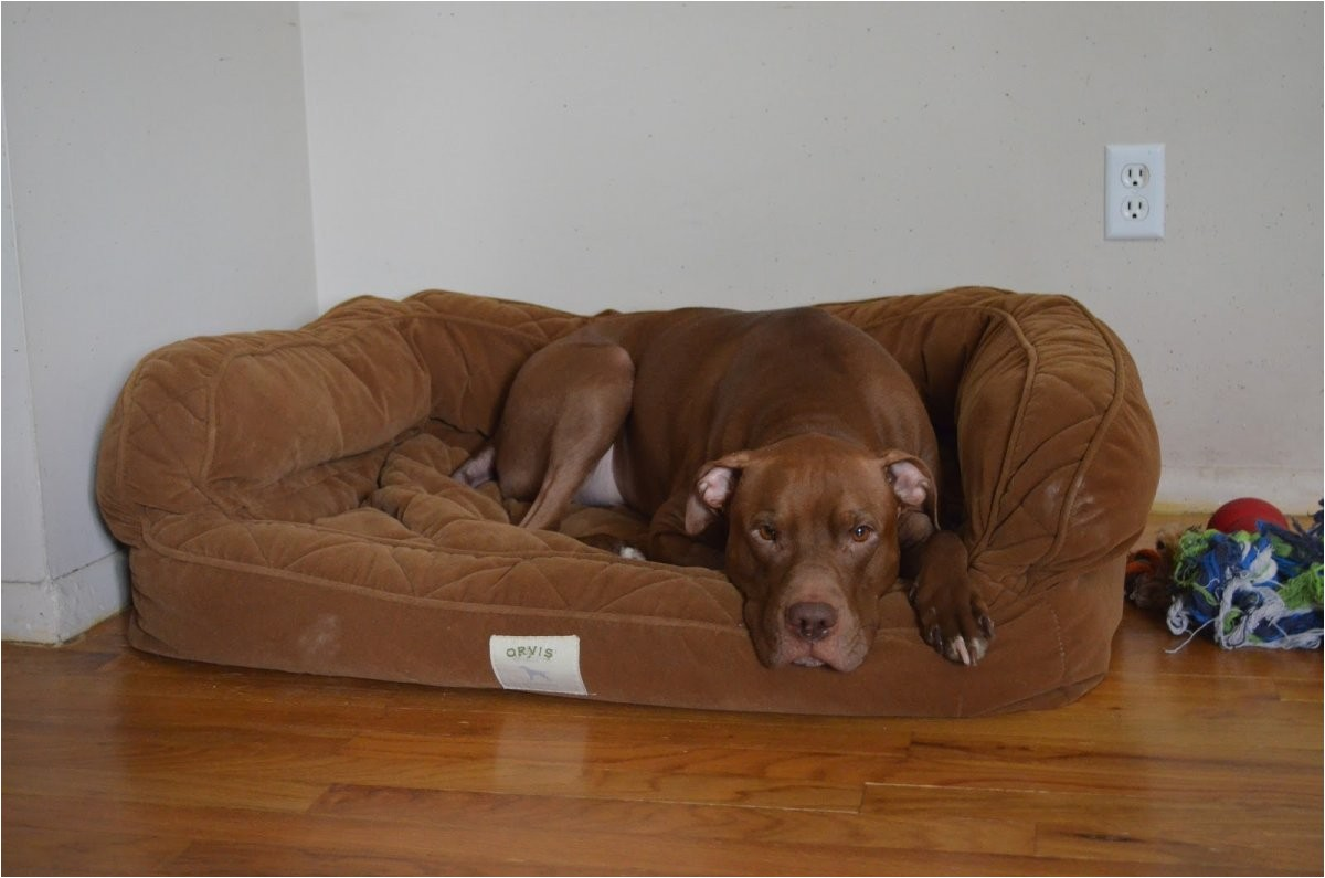 Bedside Platform Dog Bed orvis Bedside Platform Dog Bed Content Filed Under the Dog