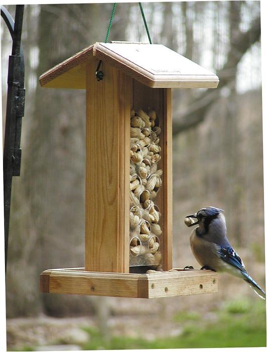 bird house 184990