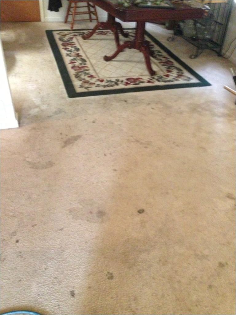 carpet cleaning fredericksburg va