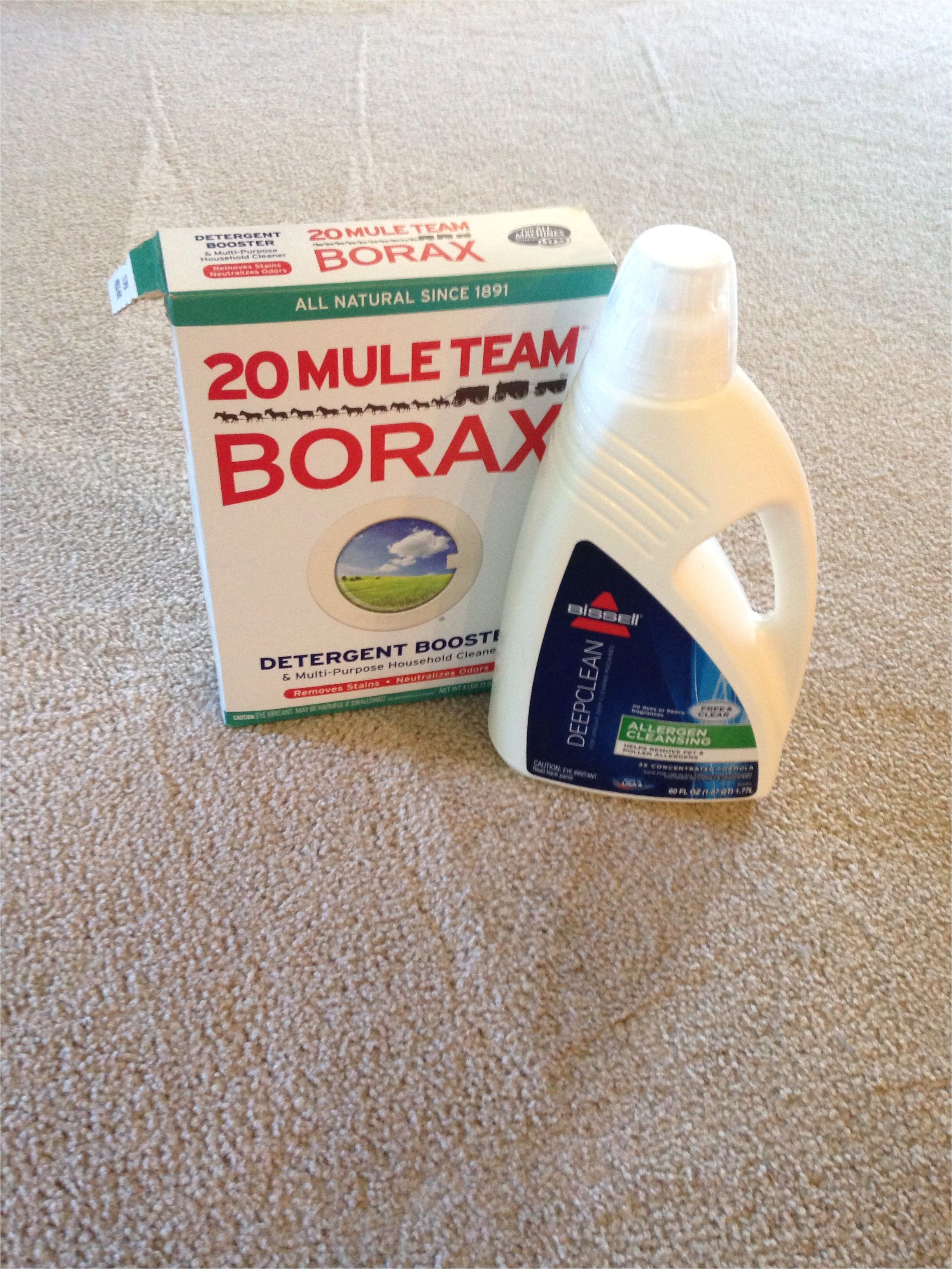 dry carpet cleaning products best of the best carpet cleaning solution for pet stains and eliminates