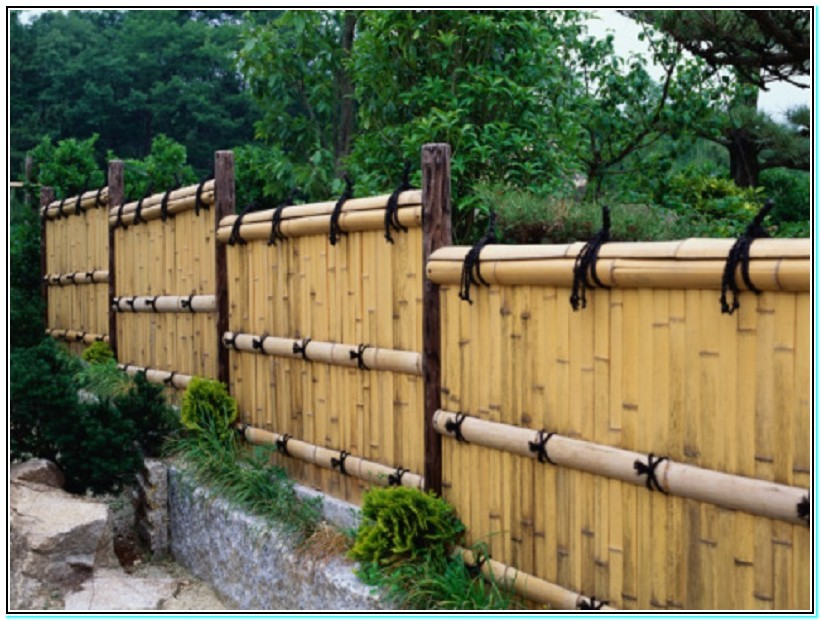 inexpensive privacy fence ideas