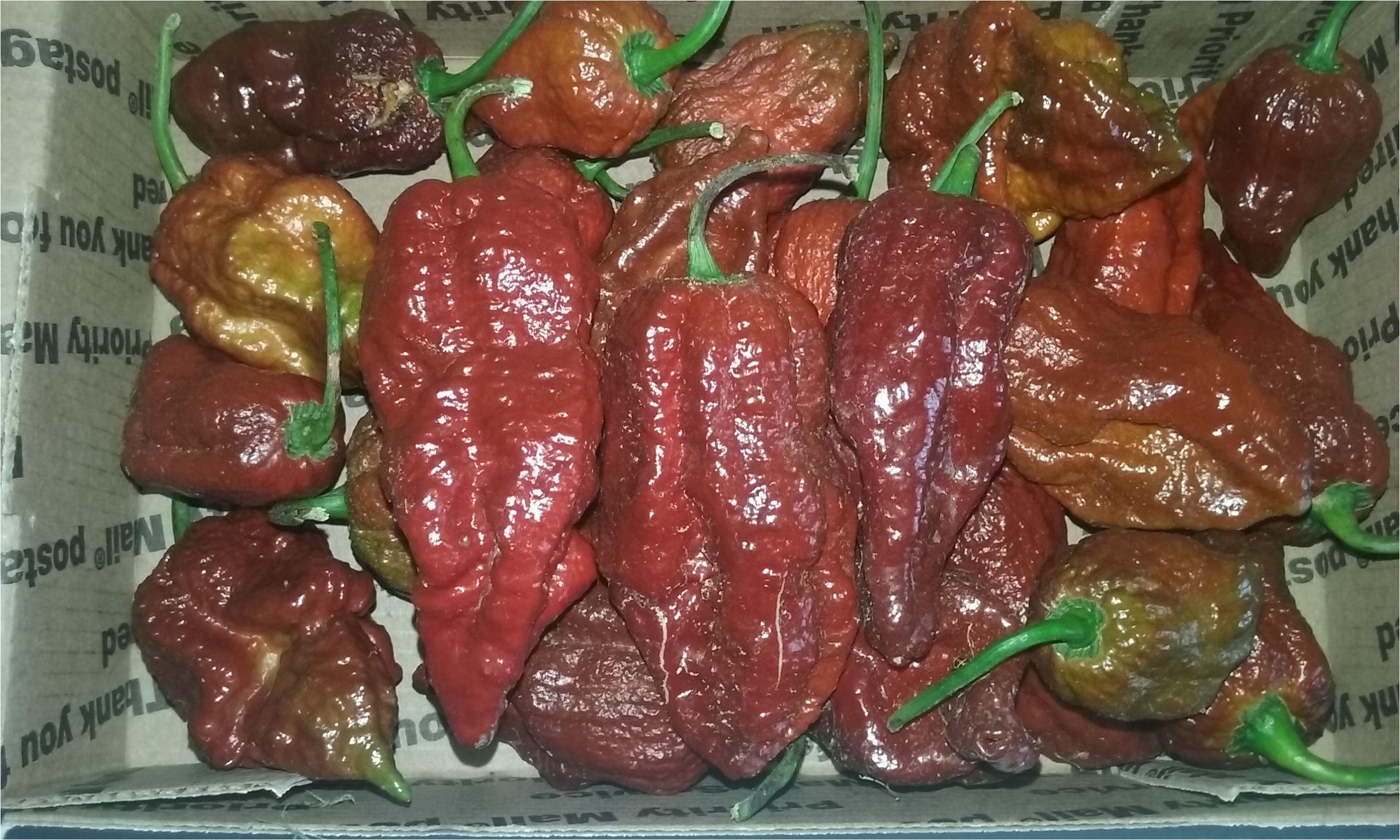 fresh bhutlah chocolate