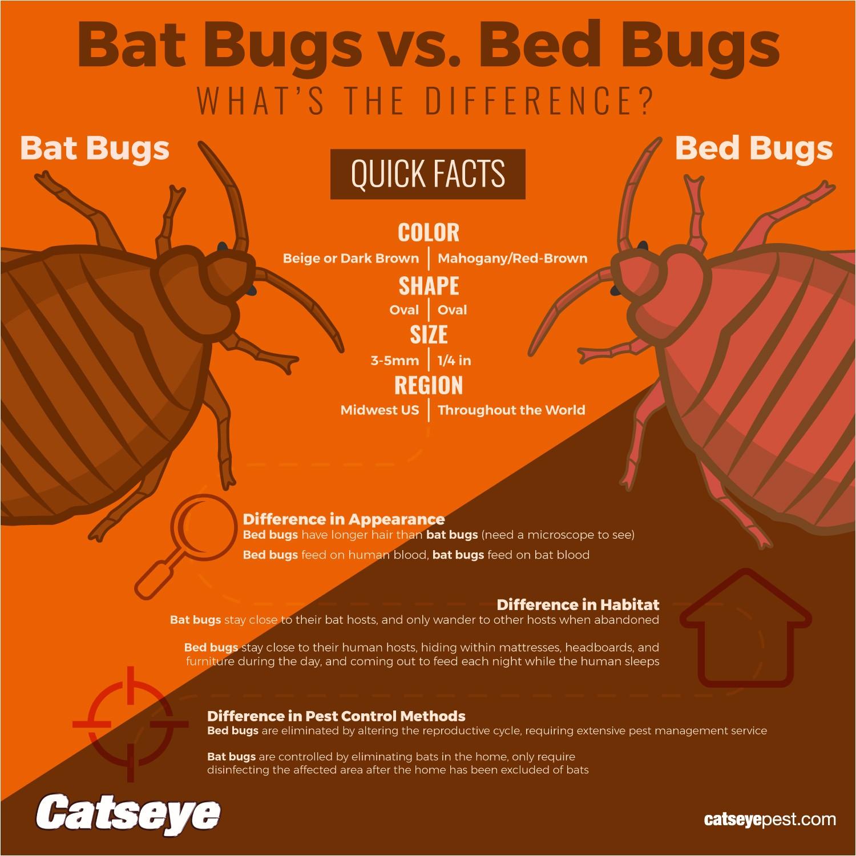 what do bat bugs look like