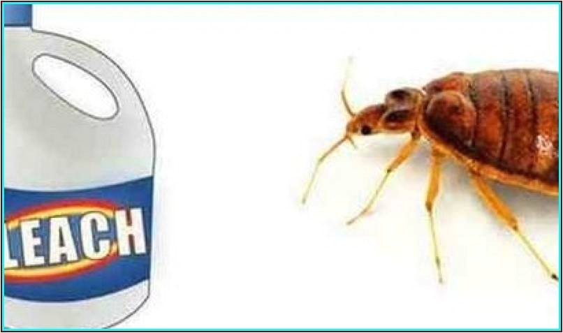 clorox bleach and bed bugs