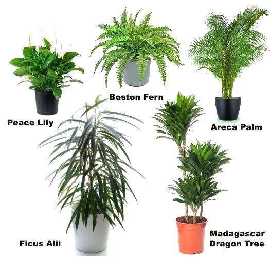 common indoor plants
