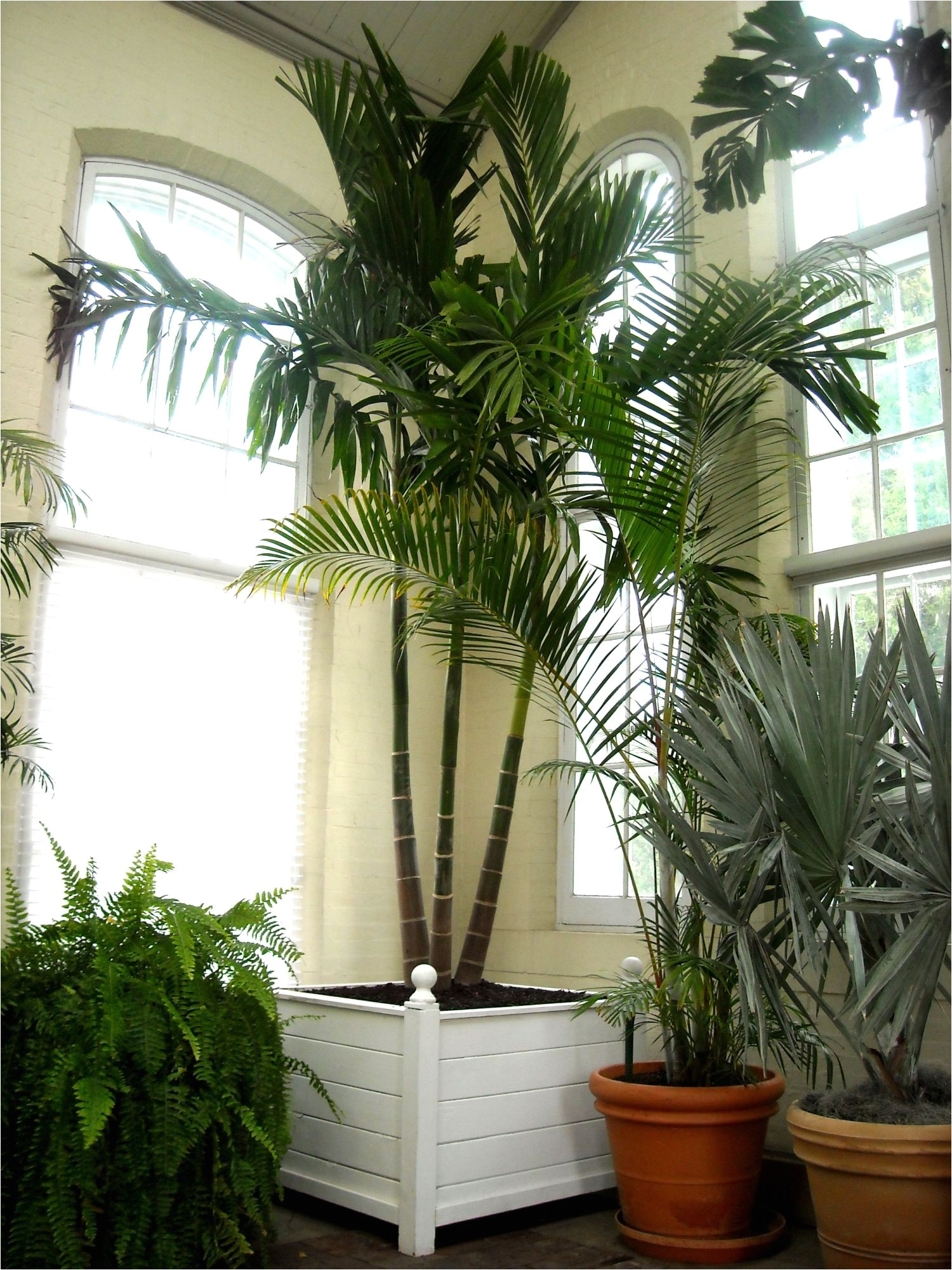 piper palm house