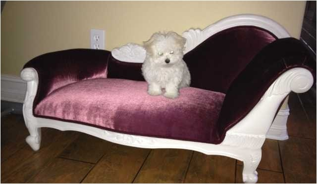 charming sofa pet sofa bed commendable eye catching costco pet sofa bed dimensions about convertable leather dog sofa images