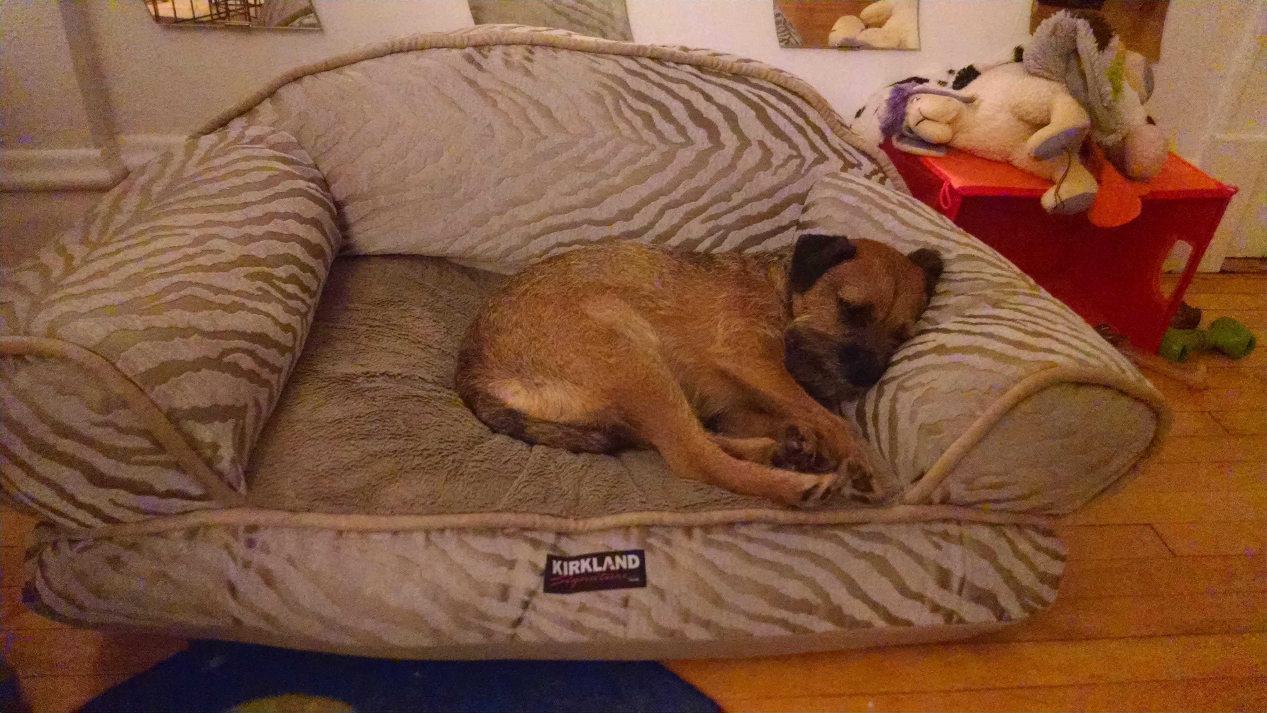 dog bed costco
