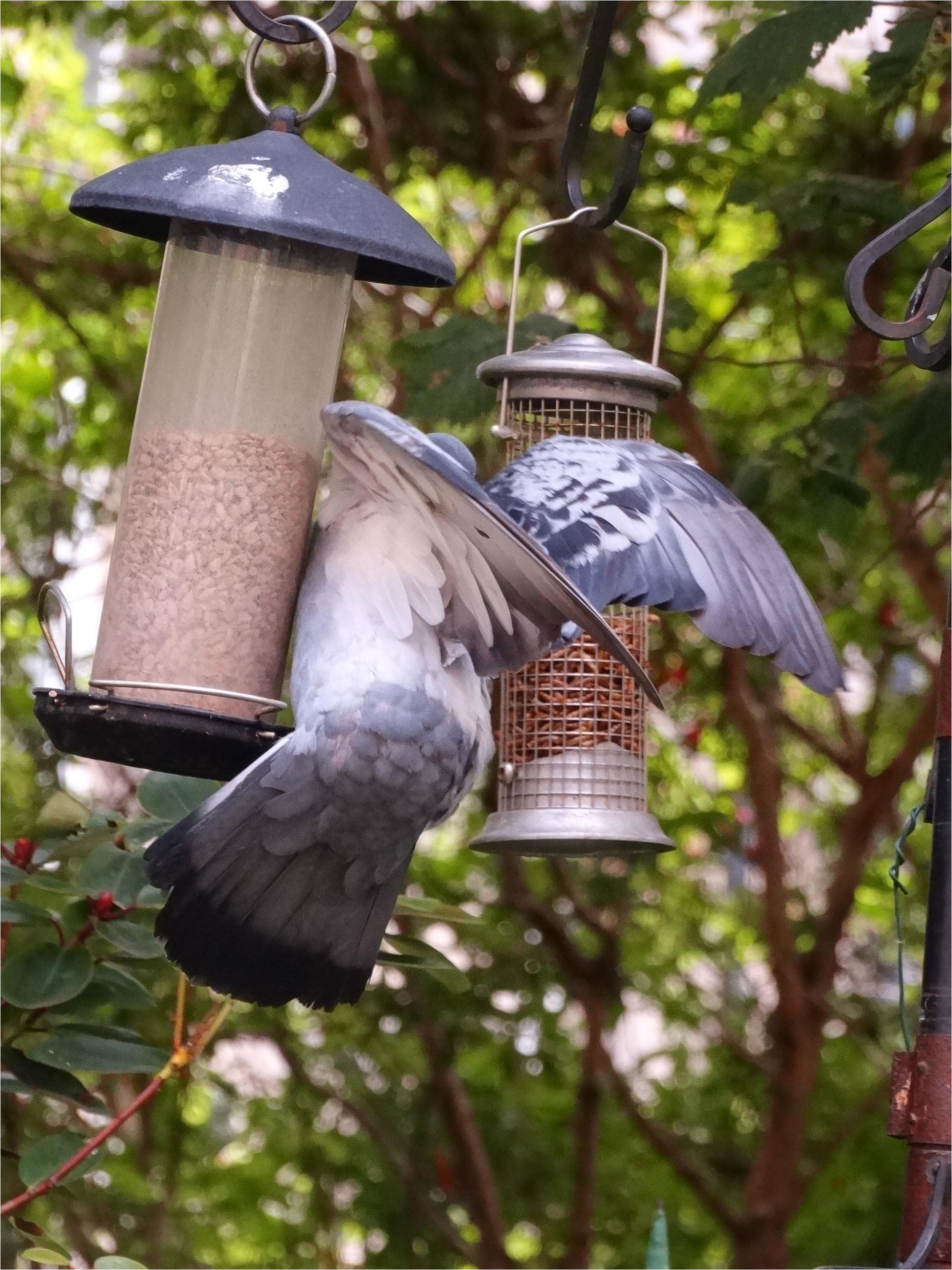 Dove Proof Bird Feeders Pigeon Proof Bird Table Gardening forum
