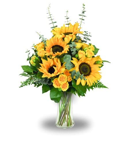 www jimmysflowers com