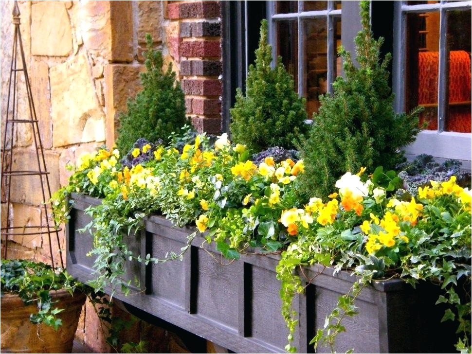 flower window boxes window boxes non flower window box ideas