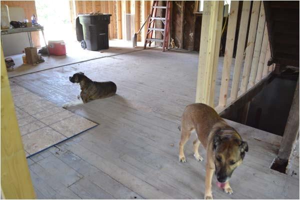 best flooring for dogs