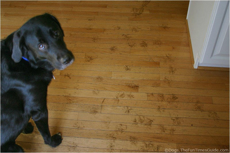 Good Wood Flooring for Dogs How to Protect Hardwood Floors From Dogs the Flooring