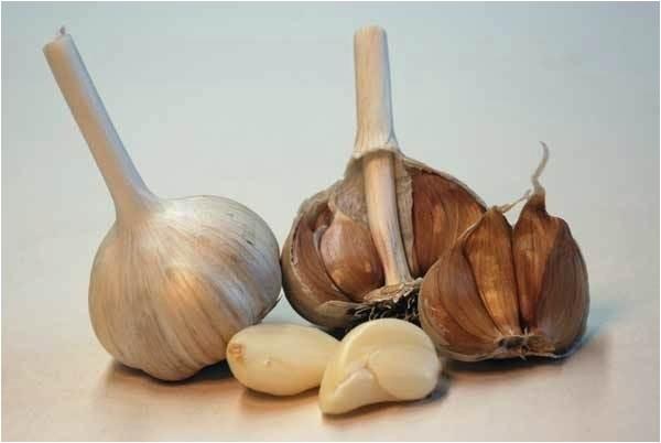 hardneck garlic seed for sale