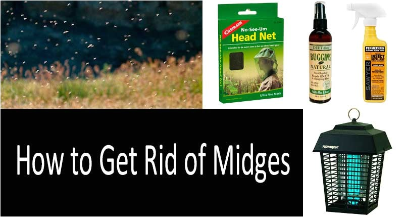 240 how to get rid of midges