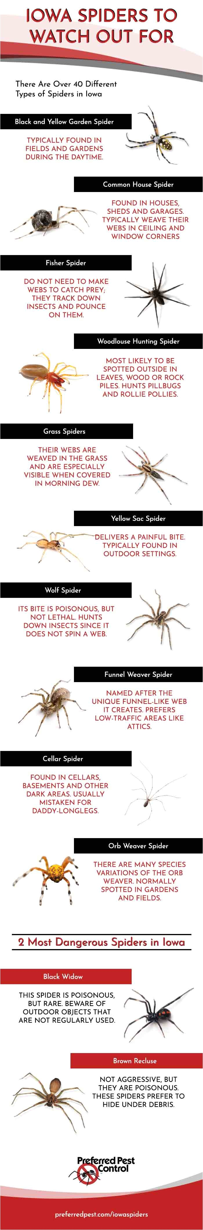 spiders in iowa infographic