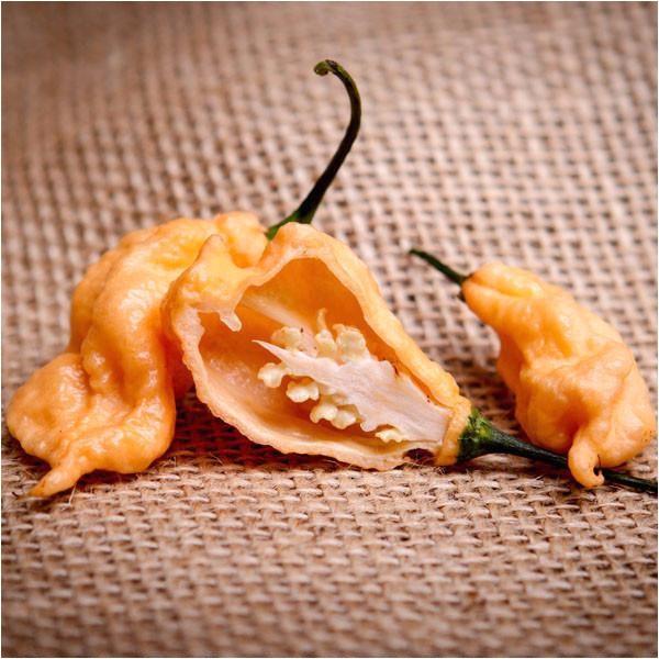 jays peach ghost scorpion