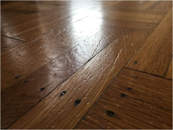 Laminate Flooring Dogs Scratch Scratches From My Big Dog On Hardwood Floor What Should I