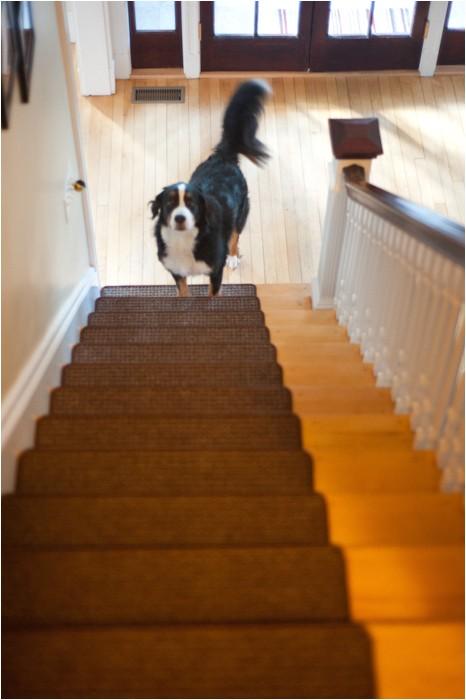 solutions for dogs slipping on hardwood floors