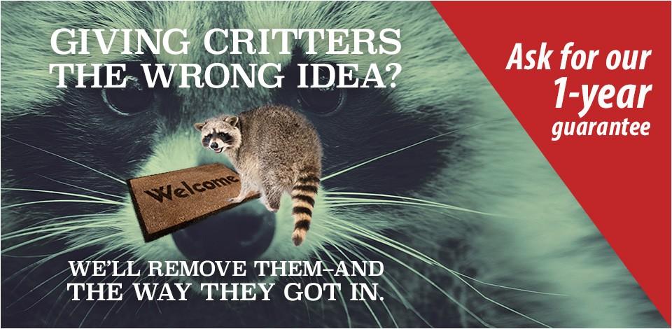 crittergitterpestcontrol com