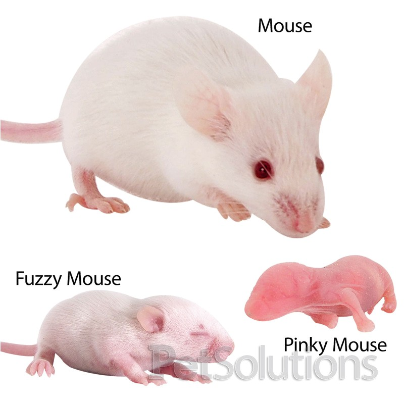 feeder mice