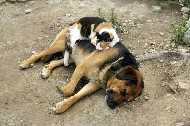 low cost pet euthanasia houston