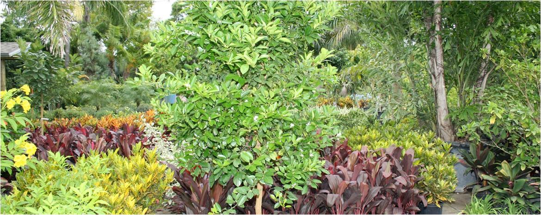 local nurseries plants trees wholesale