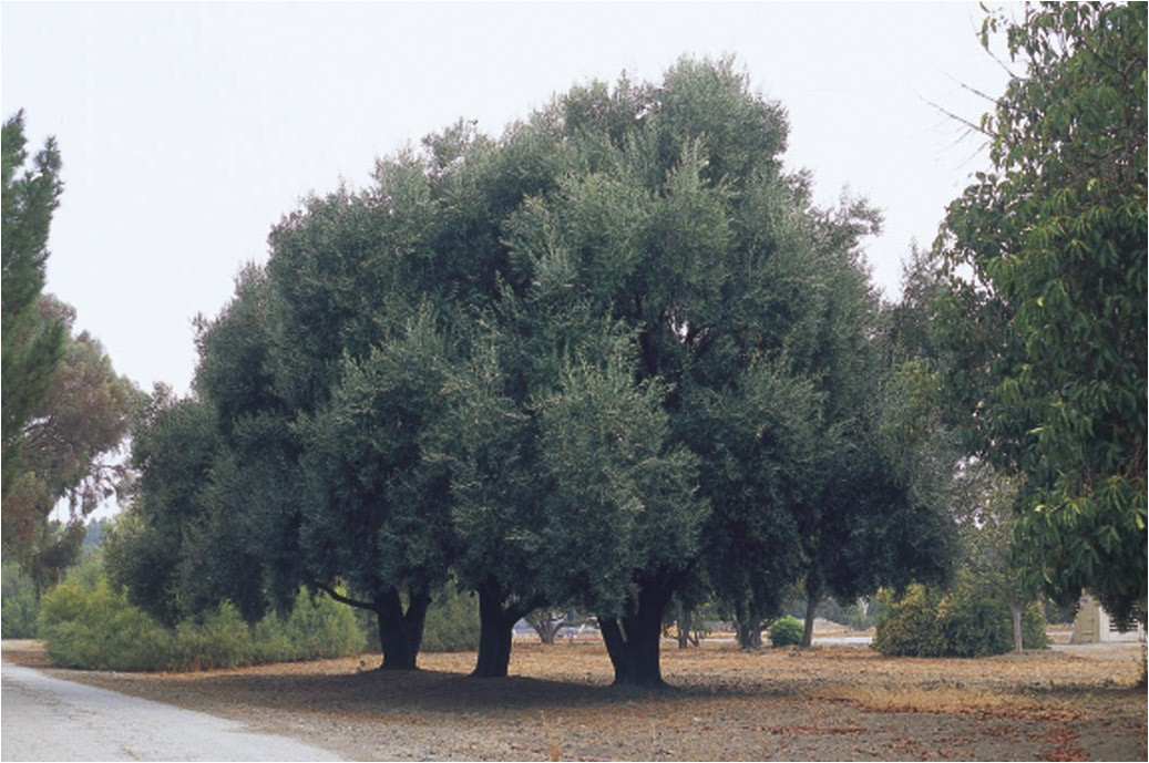 a tree research site in santa clara valley