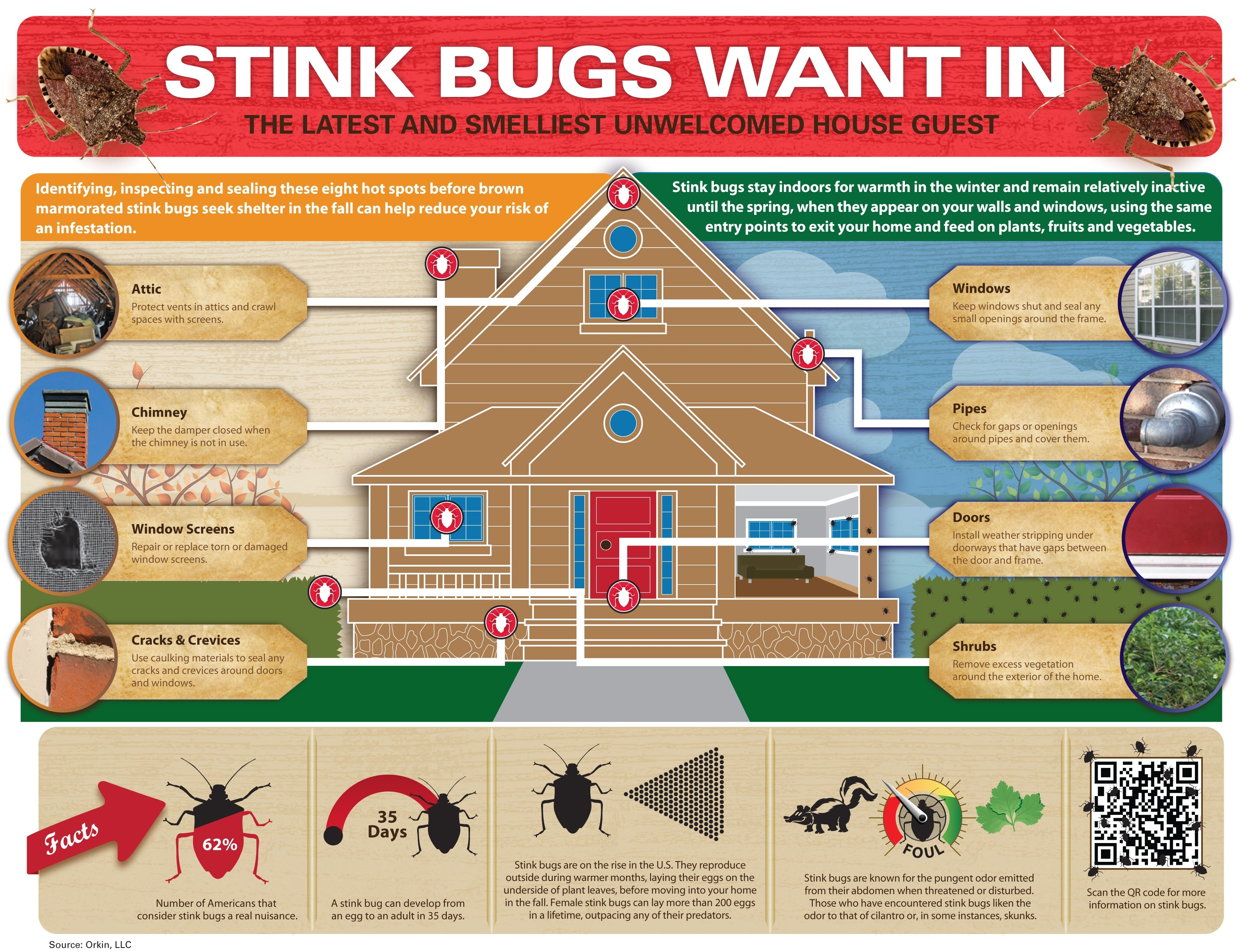 stink bugs infographic