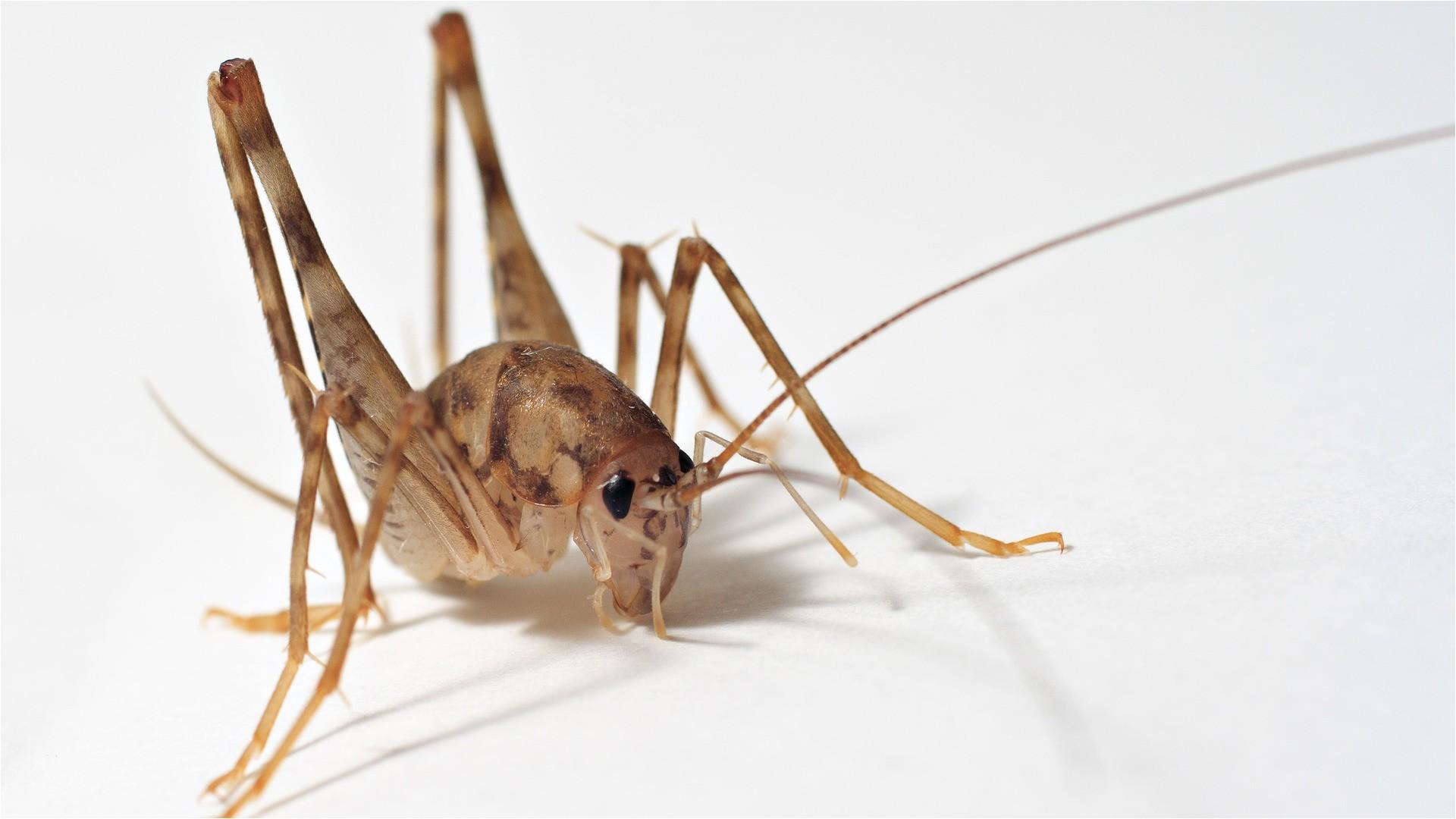 Ozone Pest Control toms River Nj Pest Control Nj Termite Control Ozane Termite Pest Control