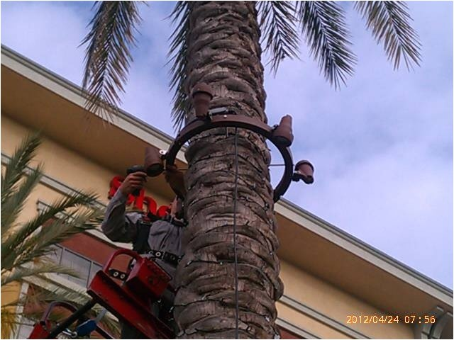 Palm Tree Lighting Ring 1000 Images About Palm Tree Lighting On Pinterest Trees