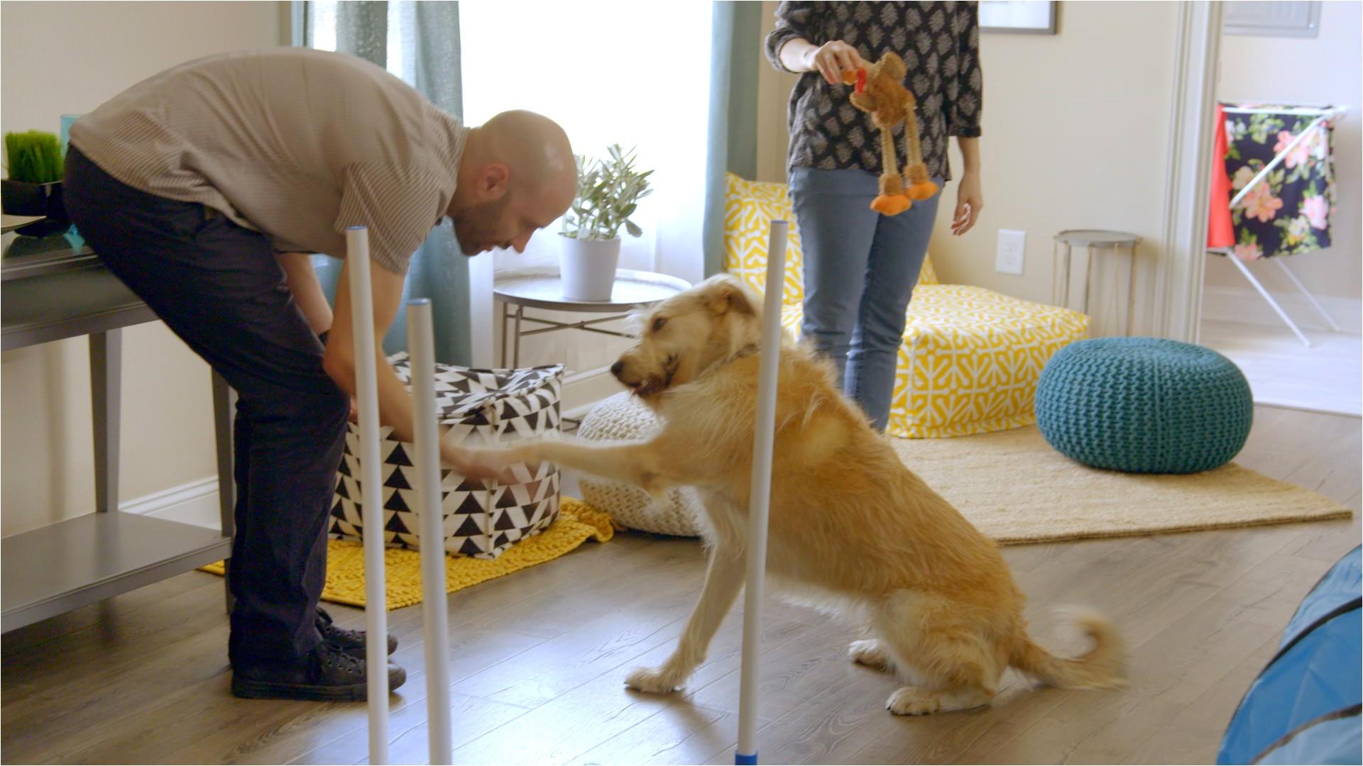 Pergo Flooring Good for Dogs Pergo Flooring for Dogs 28 Images Floor Pergo Floors