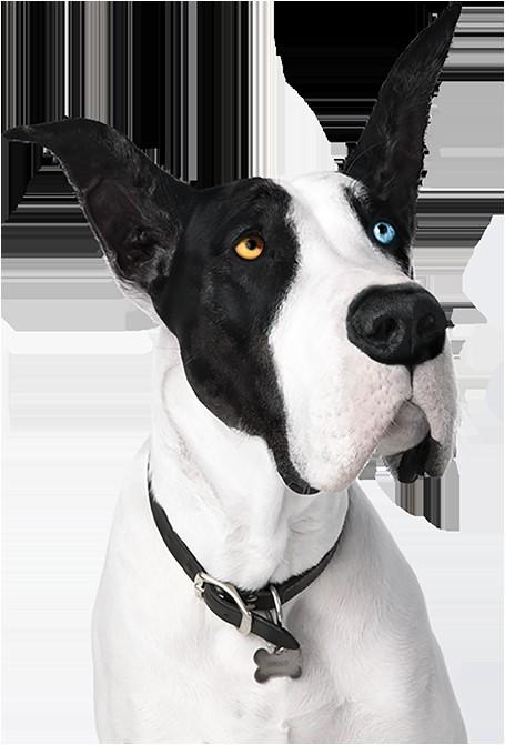 pergo flooring reviews dogs