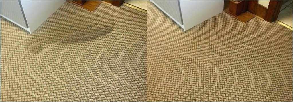 carpet cleaning york pa personal touch specials stanley steemer inside stanley steemer carpet cleaning specials