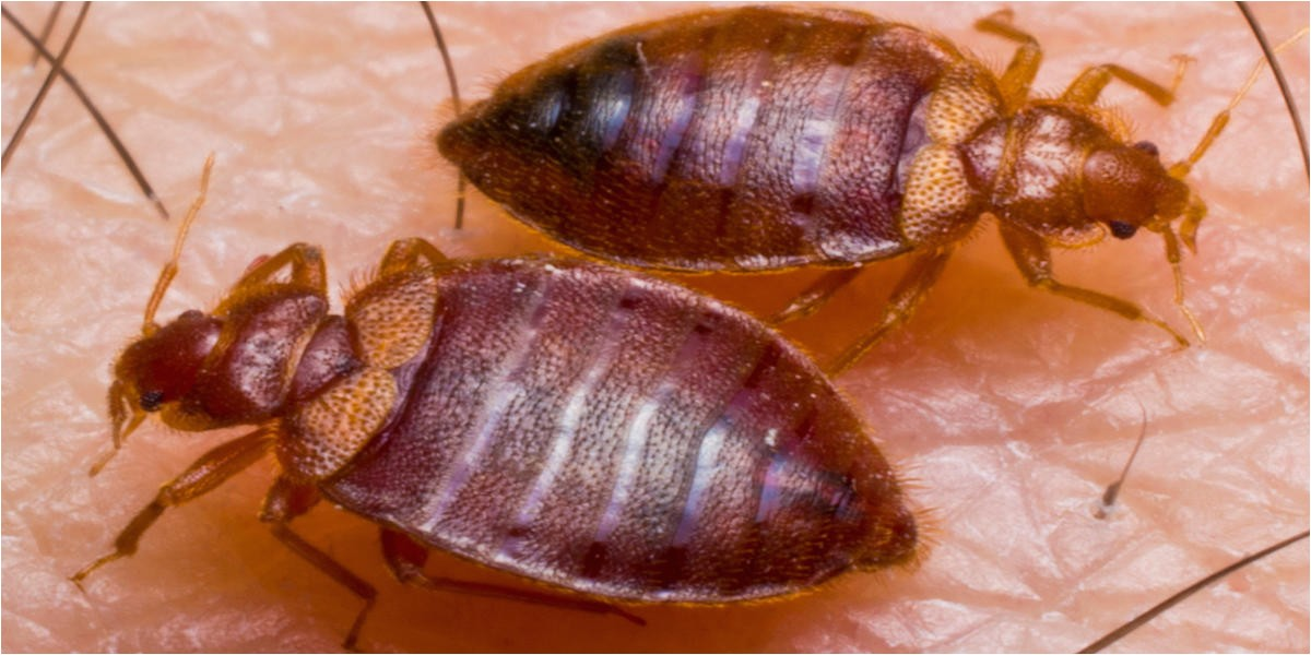 american termite and pest control 80173648