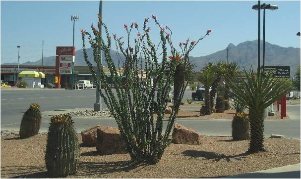 Plant Nursery El Paso Tx El Paso Landscaping