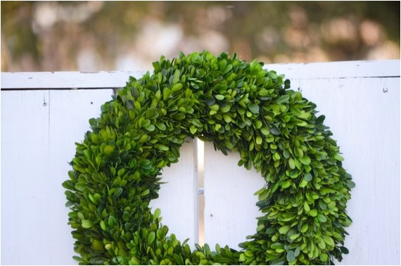 16 preserved boxwood wreath base wreath