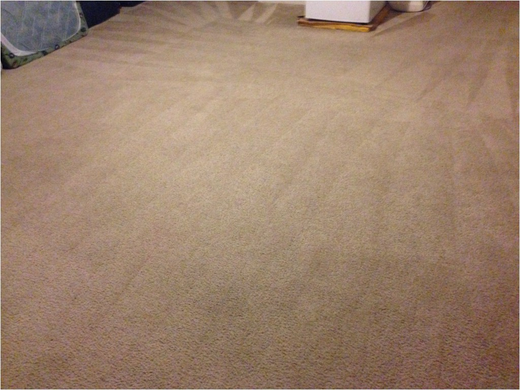 Professional Carpet Cleaning Stafford Va Carpet Cleaning and Expert Stains Removal Fredericksburg