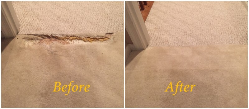 carpet pet damage repair in stafford va
