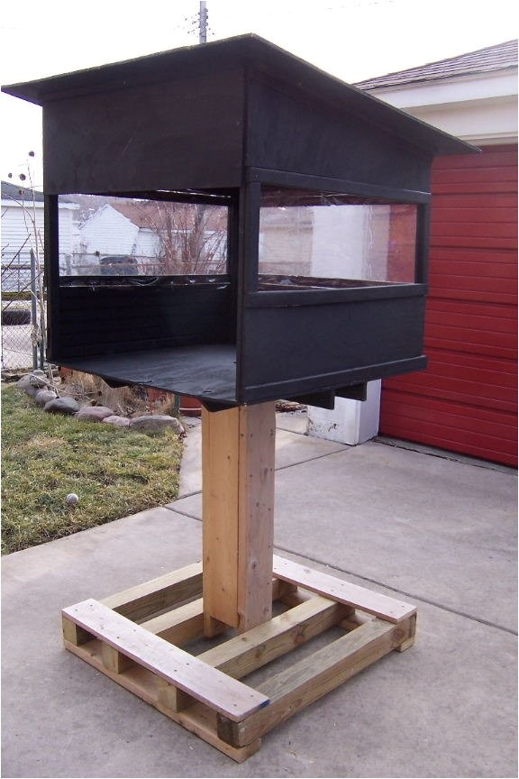Raccoon Proof Cat Feeder Feeding Feral Cats with 2 Raccoons Around sos Animals