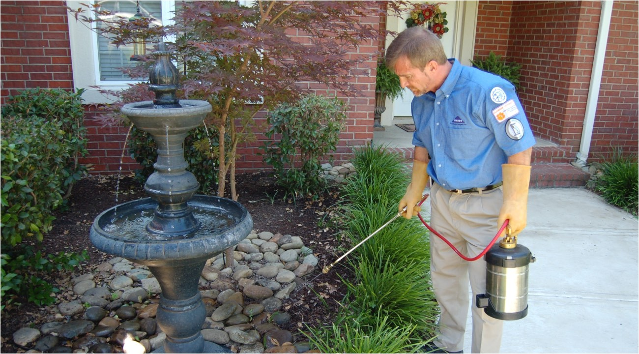 Rodent Control Charleston Sc Pest Control Charleston Pest Control Services Charleston Father