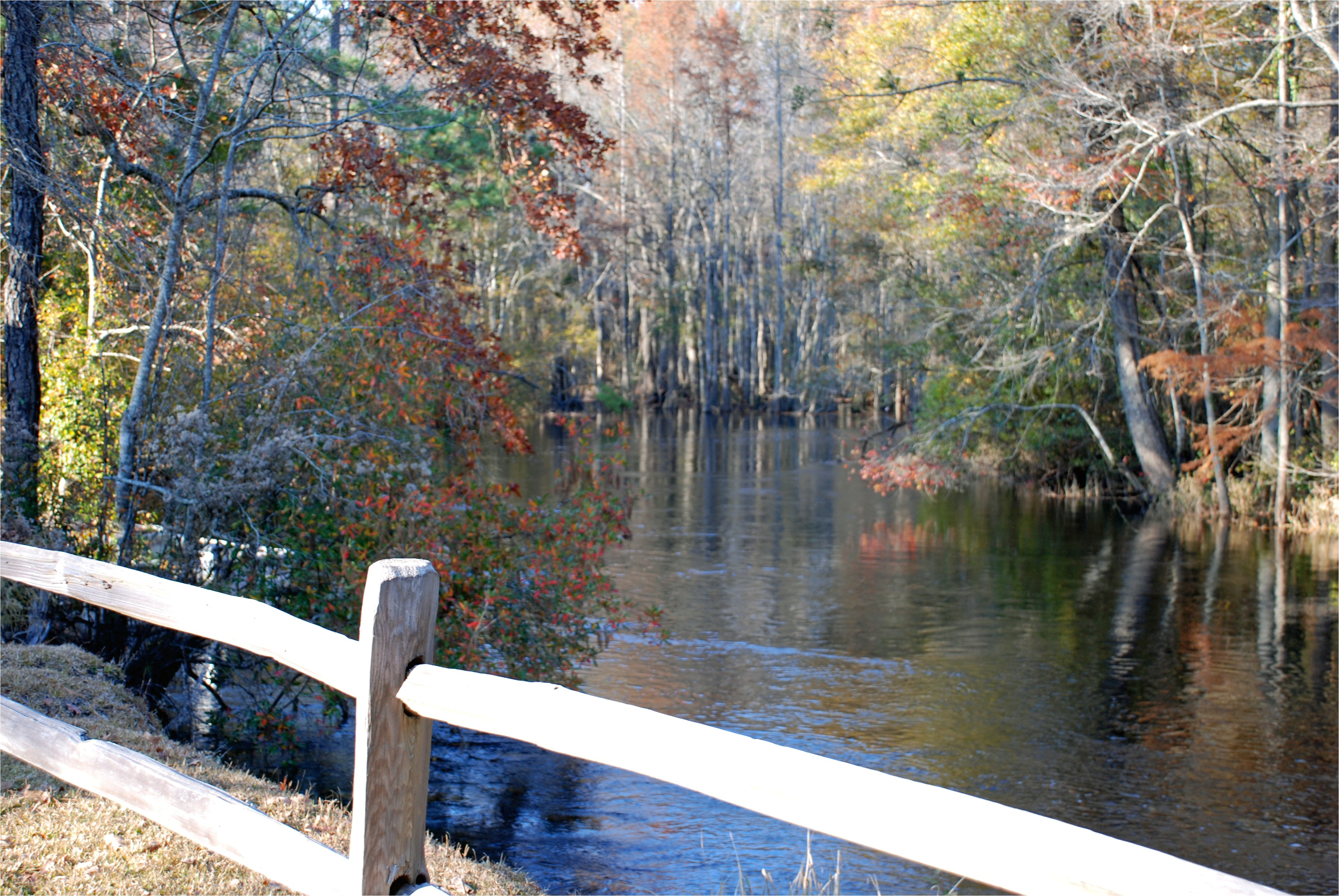 lumber river state park wagram nc