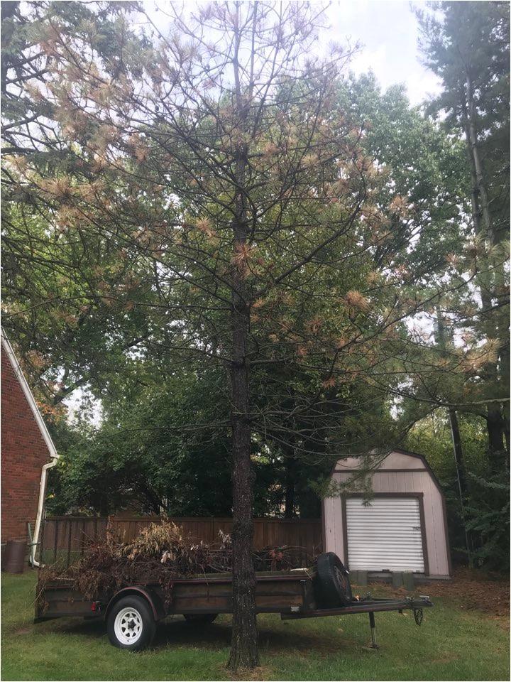 dayton tree service
