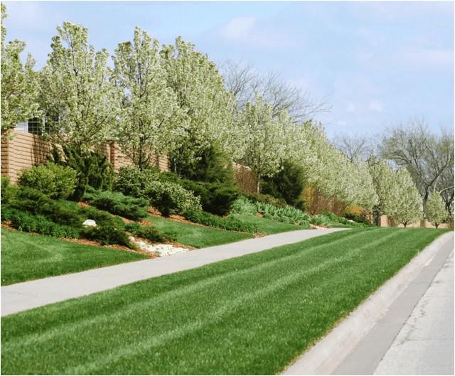 lawn tree treatments