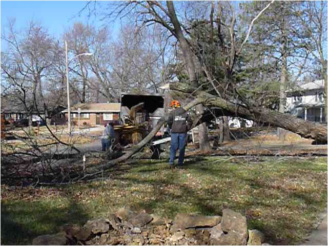 multiple tree removals lawrence