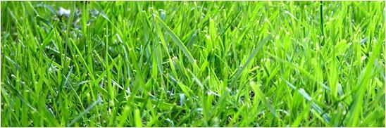 florida grasses