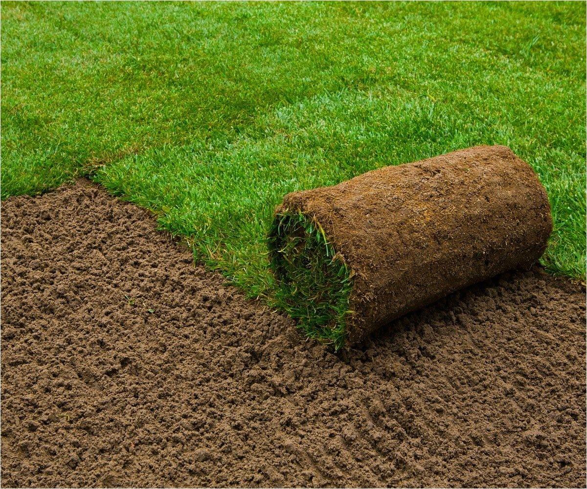 six types grass florida lawns